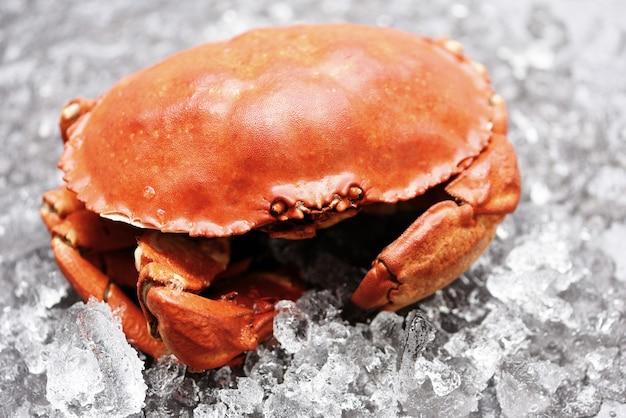 Verse krab op ijs, zeevruchten schelpdieren gestoomde rode krab of gekookte steenkrab