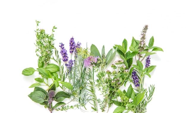 Verse kruiden basilicum rozemarijn salie tijm munt dille lavendel