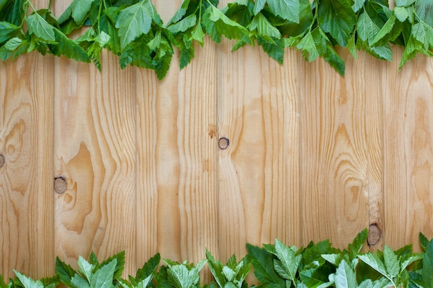 Verse lente groen gras en blad plant over houten hek achtergrond.