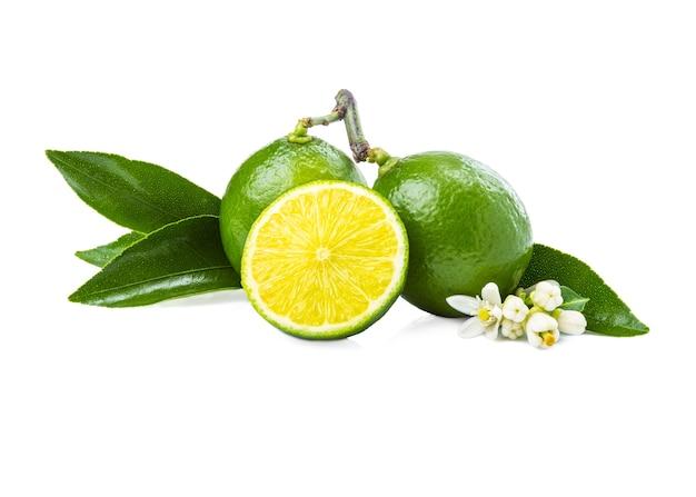 Verse limoen fruit, hele en halve snede op witte achtergrond met bladeren en bloemen