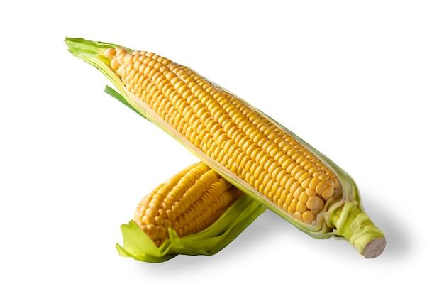 Verse maïskolven korenaar geïsoleerd op witte achtergrond