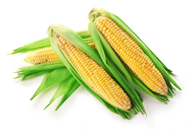 Verse maïskolven op wit wordt geïsoleerd