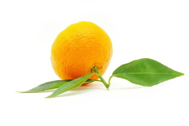 Verse mandarijn op wit wordt geïsoleerd