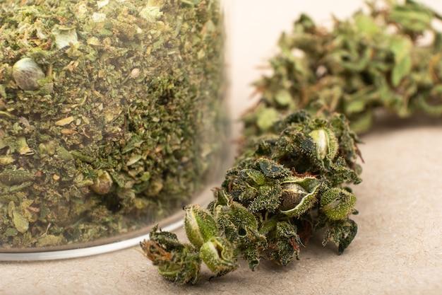 Verse medische groene marihuanaknop die close-up van cannabiszaden verzamelt