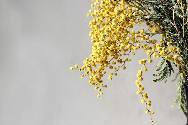 Verse mimosabloem