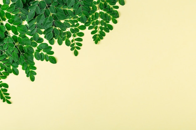 Verse moringa-bladeren (moringa oleifera) op gele muur met copyspace.