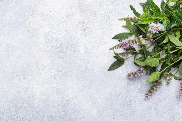 Verse munttwijgen met bladeren en bloemen op een grijze concrete achtergrond