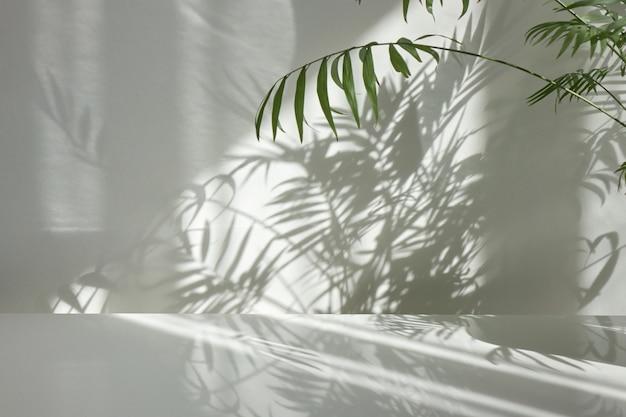 Verse natuurlijke takken van groenblijvende tropische palmplant met decoratieve schaduwen op een lichte muur en glanzend tafelblad. spel van schaduwen op een muur van raam op de zonnige dag.