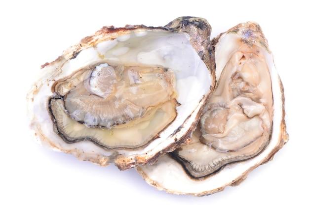 Verse oester op een witte achtergrond