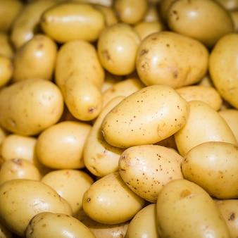 Verse oogst gezonde aardappelen