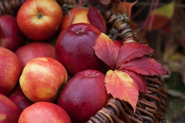 Verse oogst van appels. herfst tuinieren.