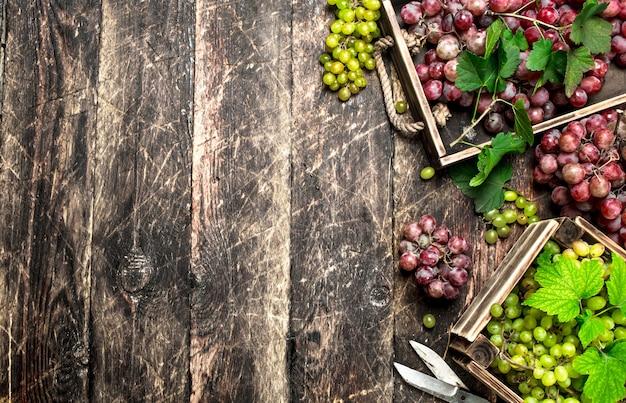 Verse oogst van druiven in dozen. op een houten achtergrond.