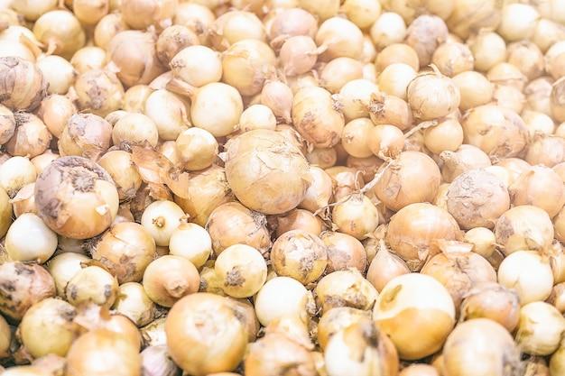 Verse oogstuien. uien achtergrond. uien in markt.