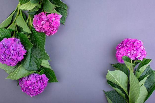 Verse paarse hortensia's op grijze ondergrond