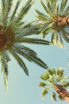 Verse palmbomen op blauwe hemel, retro afgezwakt