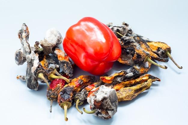 Verse paprika onder rotte paprika's met schimmel