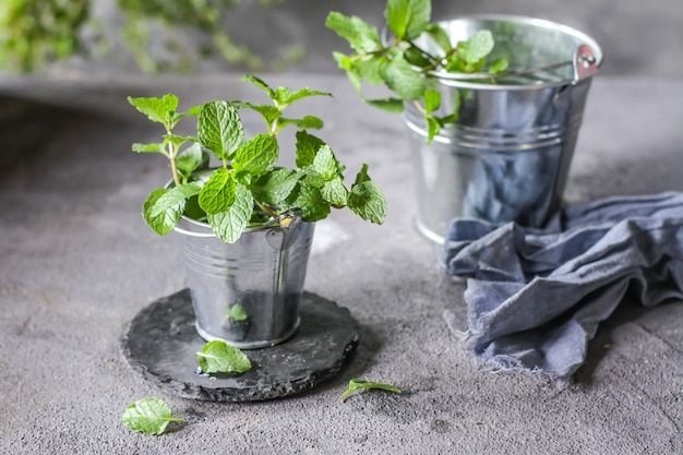 Verse pepermuntplanten in een pot
