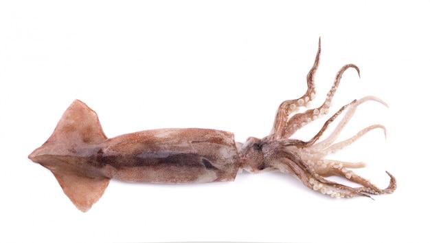 Verse pijlinktvis die op witte achtergrond wordt geïsoleerd