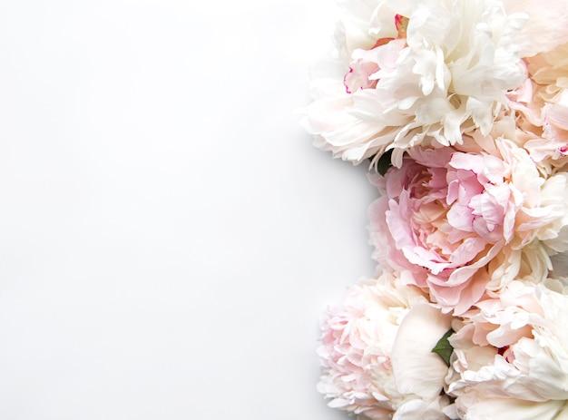 Verse pioen bloemen grens met kopie ruimte op witte achtergrond plat lag