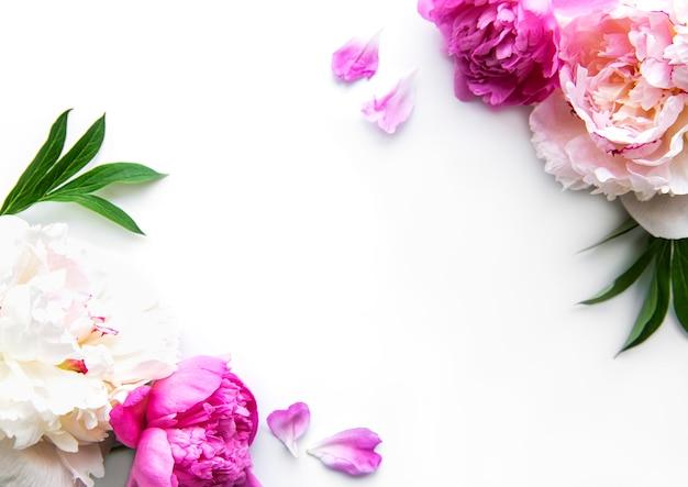 Verse pioenroos bloemen grens met kopie ruimte op witte achtergrond, plat leggen.