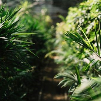 Verse planten groeien in de kas