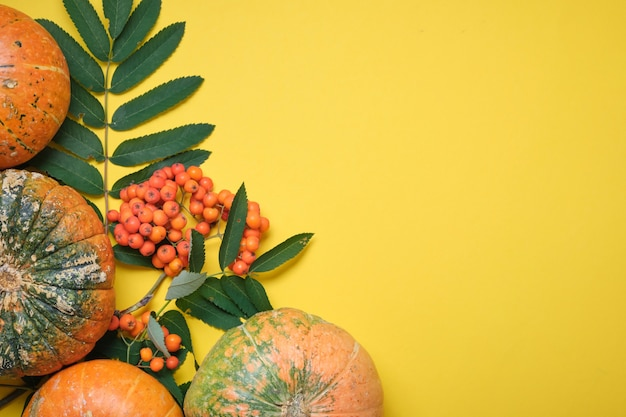 Verse pompoen op gele achtergrond, pompoen in tweeën gesneden en verschillende pompoenen van verschillende kleuren op gele herfstbladeren