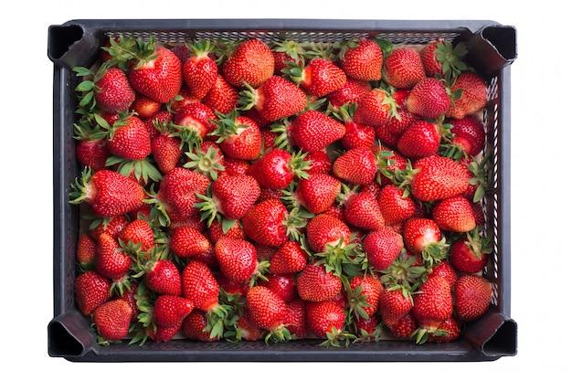 Verse rijpe aardbeien in een plastic doos die op witte achtergrond wordt geïsoleerd