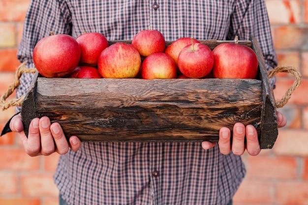 Verse rijpe biologische rode appels in houten doos in mannelijke handen.