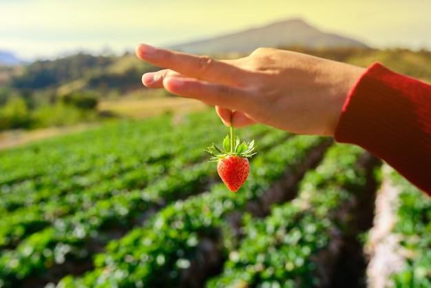 Verse rijpe rode aardbeien in de hand Premium Foto