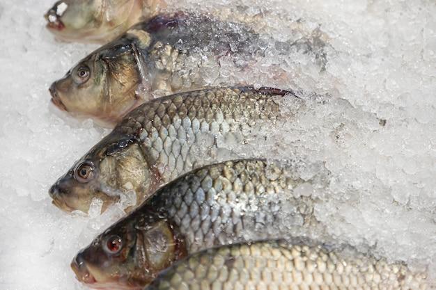 Verse riviervis in ijs op de vismarkt of supermarkt.