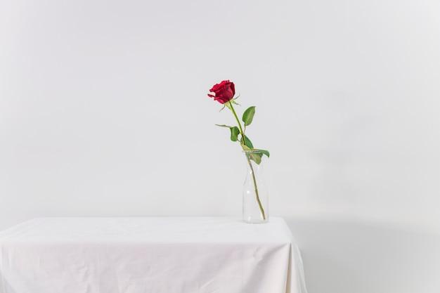 Verse rode bloem in vaas op tafel