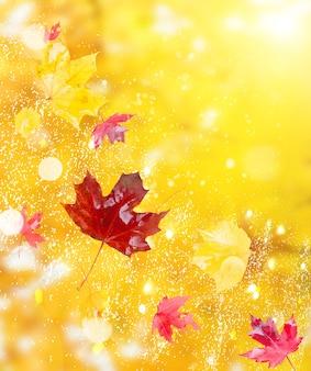 Verse rode en gele herfstgebladerte achtergrond met zonneschijn