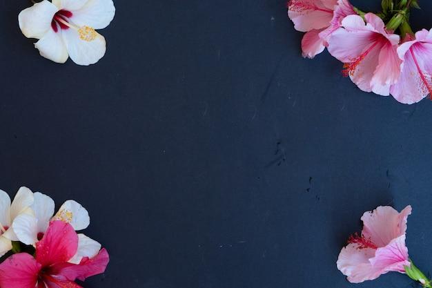 Verse roze en witte hibiscus bloemen op zwarte achtergrond, frame met kopie ruimte