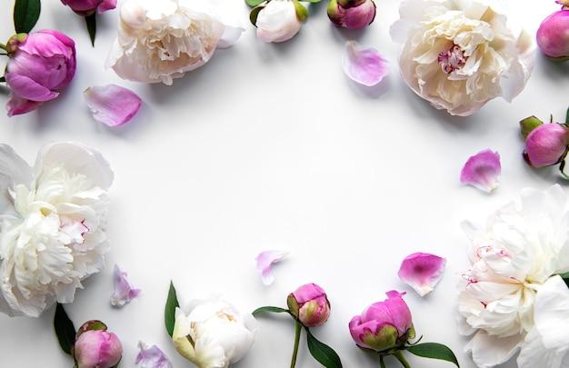 Verse roze pioen bloemen grens met kopie ruimte op witte achtergrond, plat leggen.