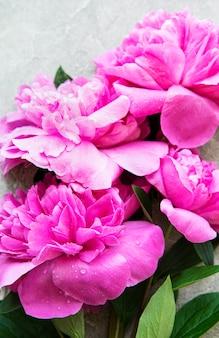 Verse roze pioenroos bloemen grens met kopie ruimte op grijze betonnen ondergrond, plat lag