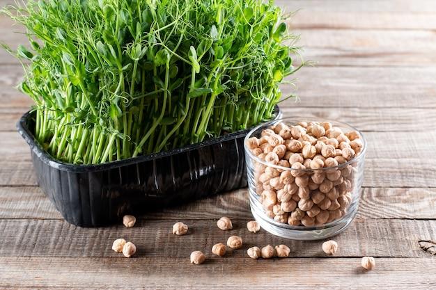 Verse, sappige groene microgreens groeien in trays