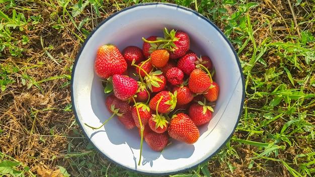 Verse, sappige rijpe smakelijke biologische aardbeien in een oude metalen kom buiten op een zonnige zomerdag. aardbei rode verse bessen en zoet sappig fruit.