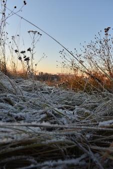 Verse sneeuw op het gras en de dageraad