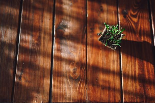 Verse spruiten, plant in biologisch afbreekbare pot. eco-tuinieren thuis