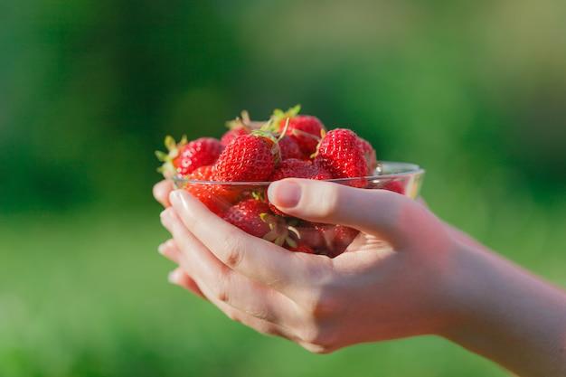 Verse stawberry bij de hand