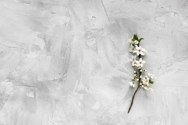 Verse tak met witte bloemen op grijze achtergrond