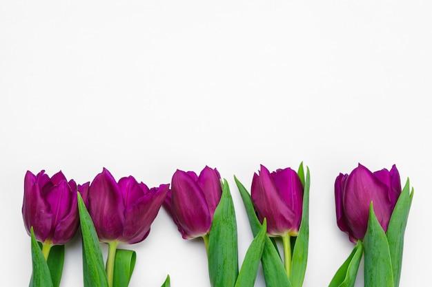 Verse tulpenbloemen die op witte achtergrond worden geïsoleerd