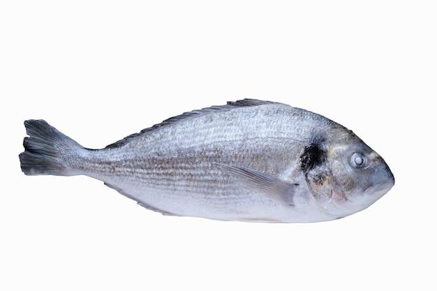 Verse vis geïsoleerd op wit. dorado klaar om te koken.