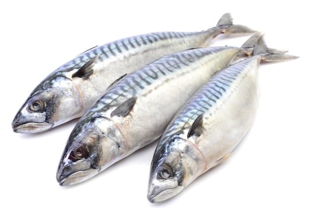 Verse vis op een witte achtergrond