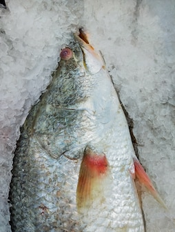 Verse vis op ijsverkoop in zeevruchtenmarkt. zeevruchten rauwe vis.