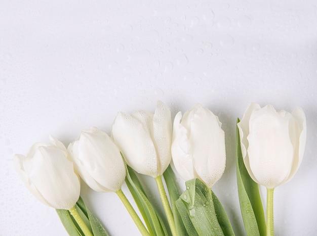 Verse witte tulpen op witte achtergrond