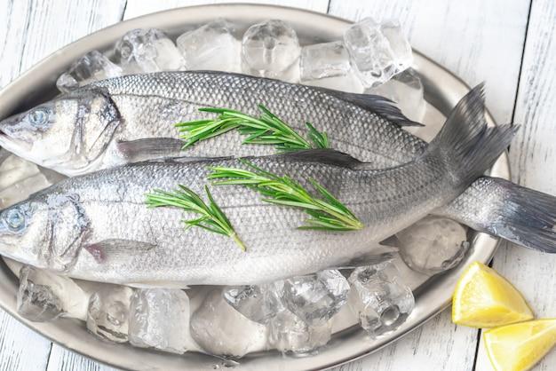Verse zeebaars vis
