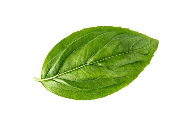 Verse zoete basilicum bladeren geïsoleerd op een witte achtergrond. geïsoleerd van italiaans basilicumblad.