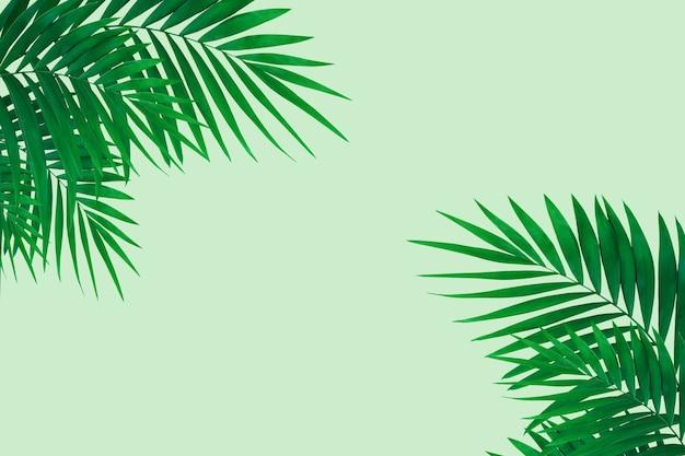 Versheid. exotische groene tropische palmbladeren geïsoleerd op een lichte achtergrond. ontwerp voor uitnodigingskaarten, flyers. abstracte ontwerpsjablonen voor posters, covers, wallpapers met copyspace voor tekst.