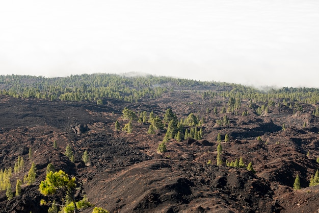 Verspreid bomen op vulkanisch reliëf